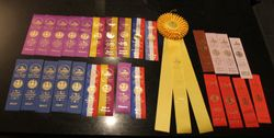 Koda, Vicky & Brodie's ribbons from their  1st show