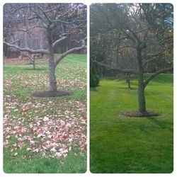 Before and After Cleanup