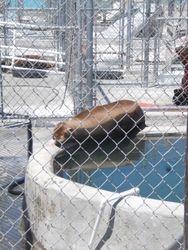 Marine Mammal Rescue Center