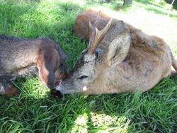 Aya with buck Scotland 09