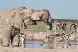 Nxai Pan Elephant