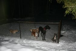 Heidi, Harley, Buck, Solomon and Frankie