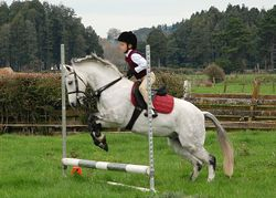 Pony Club Show Jumping