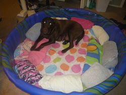 Maggie waiting for the gang in the clean bed