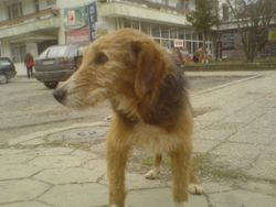 Barney the first time we saw him on the streets