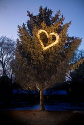 The Heartlight Tree 20th Anniversary