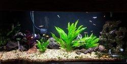 Virgil's planted Aquarium