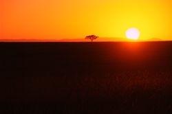 hot masai mara sunset