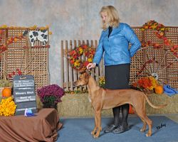 Kenya first show at 13 months  Luna X Arusha