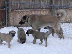 Pups with Atakan