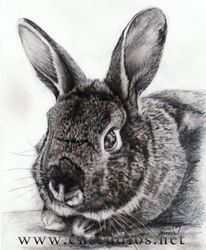 Wesleigh the Bunny Portrait