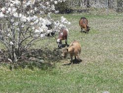 Meadow, Apache and Maverick