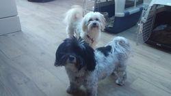 Coco & Chobi
