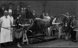 An Ox Roast. 1930s