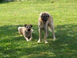 Tayyar and Pasa