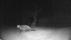 The GENET came back to visit to us on the last night at Mabula
