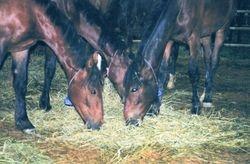 BLM Mustangs 06/09