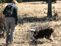 K9 Snap barking at source