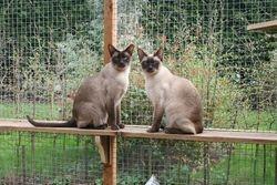 Tinka and Milly