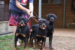 Ruby, Piper & Haarley at 15 weeks