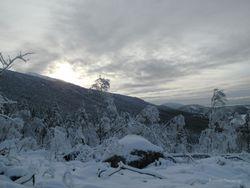 Winter picture 12.01.2011