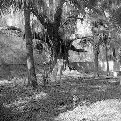 Datha Island Sams family cemetery - 1950s