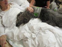 Ludvig i sengen til sykehjemsbeboer