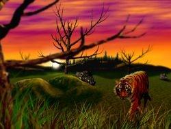 Tiger (vs Swan)