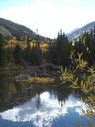 Beaver Pond near Salida