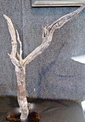 Earthen Wood