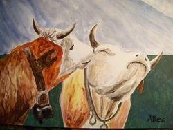 Kissing cows