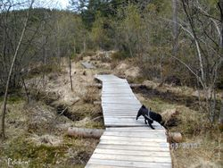 """On our walk to """"Podlen"""" 09.05.2010"""
