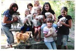 Pomeranians and friends