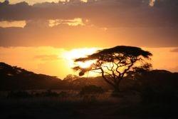 Sunset - Amboseli Game Reserve