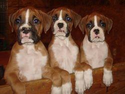 Phoebe's Pups 2011
