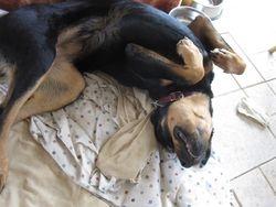 She really likes to sleep this way.