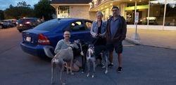 Lynne,Philippe-Estavan with greyhounds