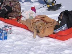 Izzie on a snow adventure