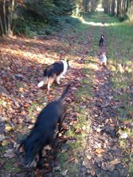 Kings Forest with Mia, Brodie and Dusty