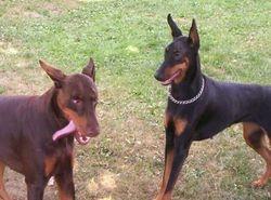 apollo and winnie