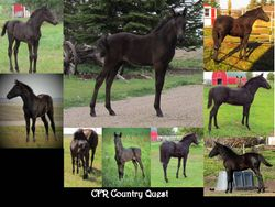 CFR Country Quest