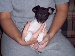 Irwin - Oct 2006 Baby Boy