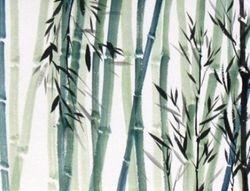 Bamboo   Field       B