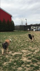 Reyna and Shine playing chase
