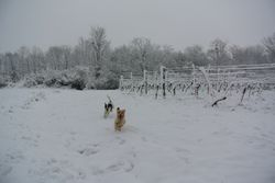 Mutley and Jess playing chas in the snow