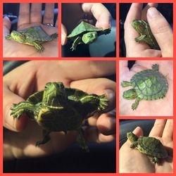 I LOVE turtles!!!