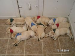 Resting beautifully
