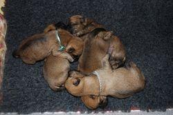 Puppy Mash-up - Day 5