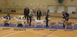 BIS, Reserve BIS, Best Puppy, Best Veteran and Reserve Veteran