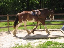 Reflection Intro to Side Reins